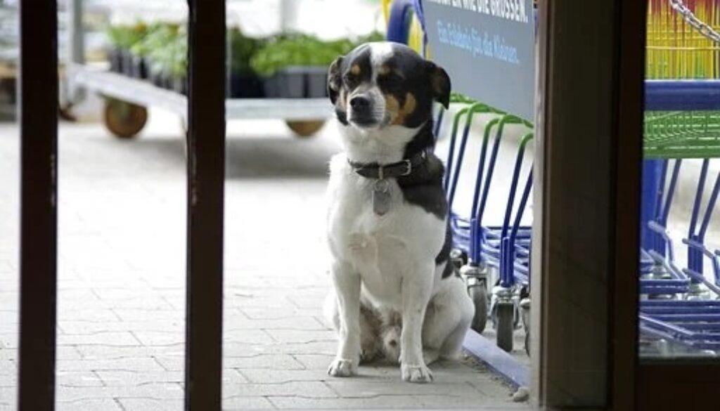 dog-4125685__340