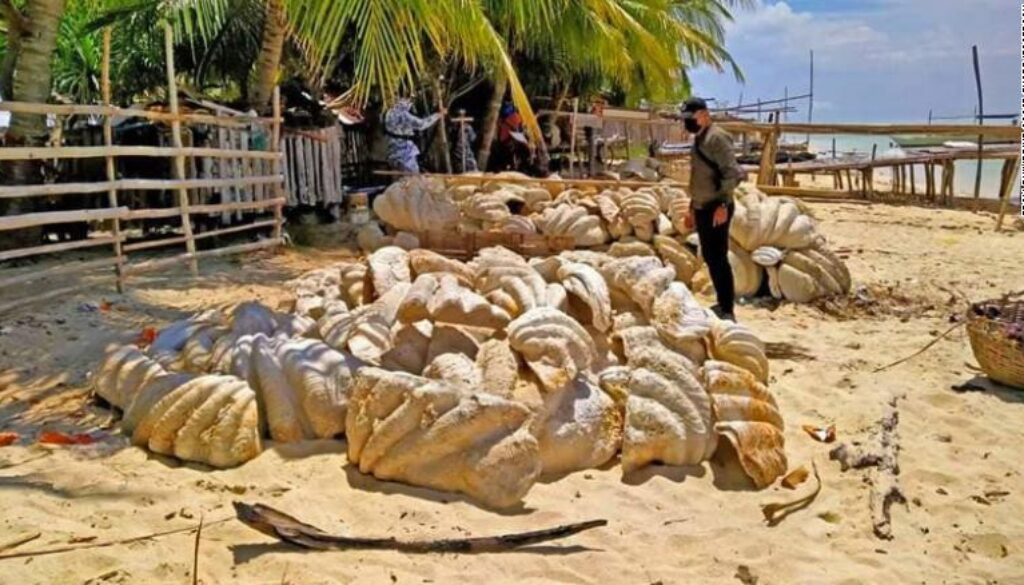 210417105533-restricted-giant-clam-shells-philippines-0416-exlarge-169